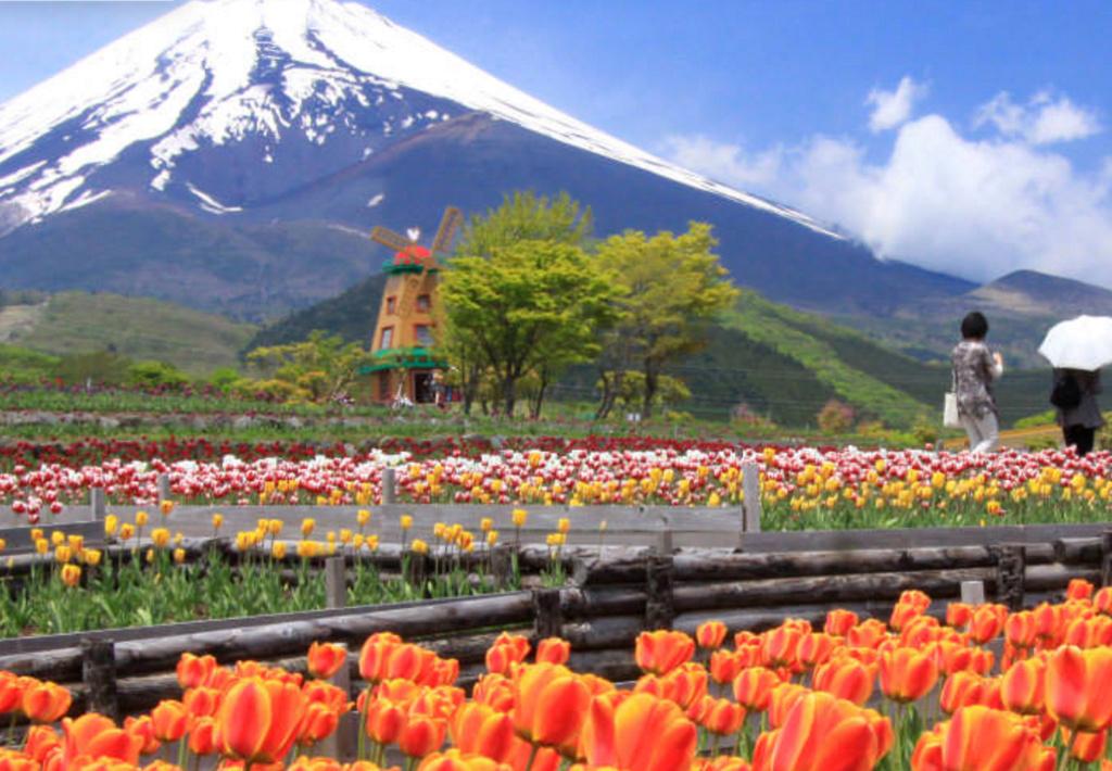 ぐりんぱ 富士山の裾野 天空のチューリップ祭り