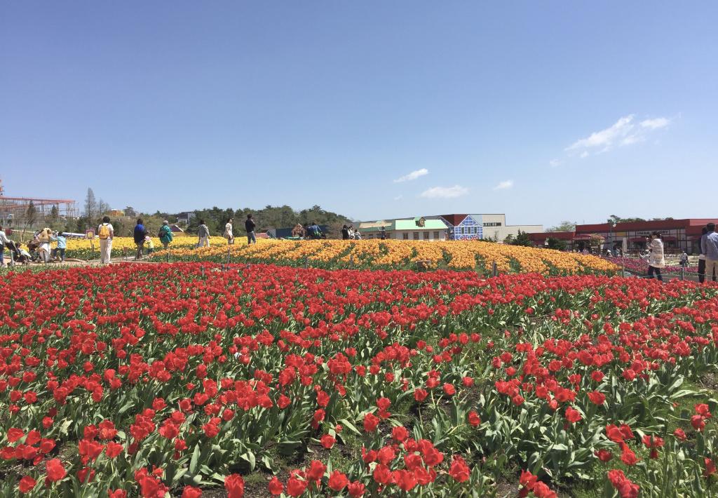 tulip-fes5