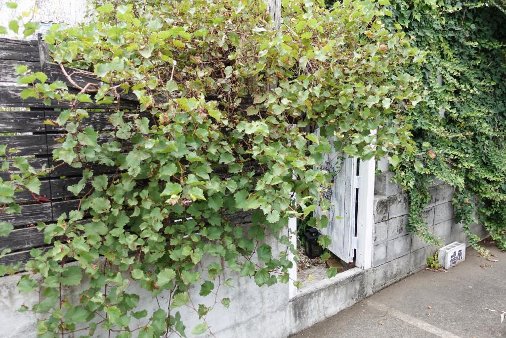 アガサの裏手玄関